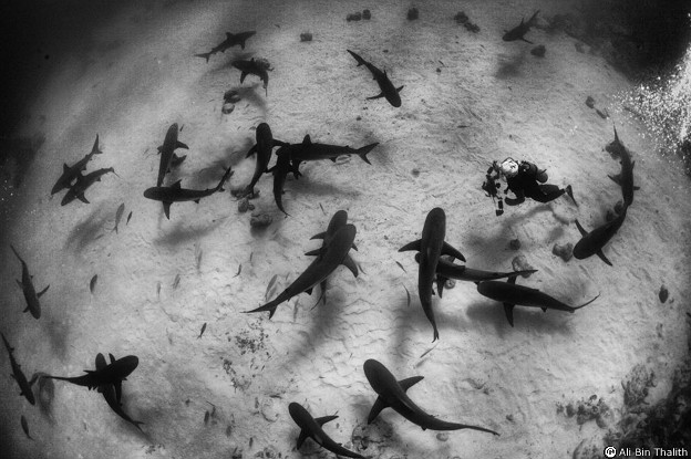 Tiburones en las bahamas