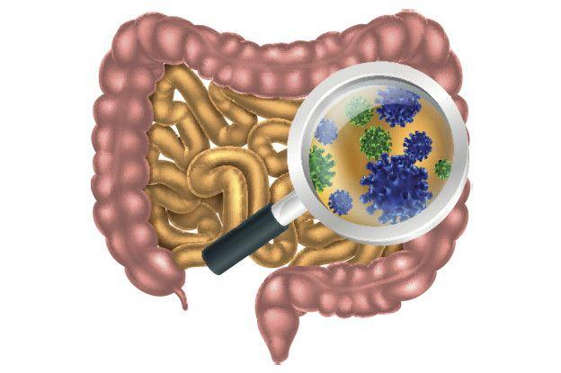 Кишечная микробиота