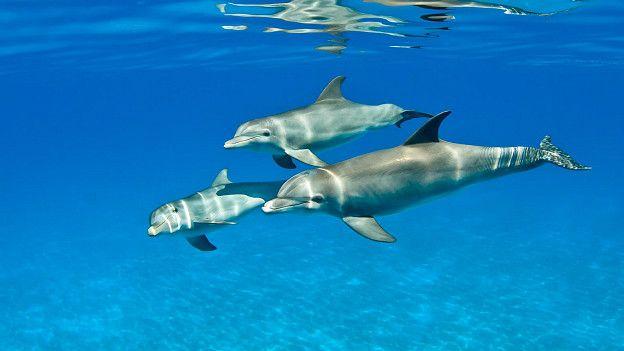 Дельфины-афалины умны, но характер у них порой довольно скверный