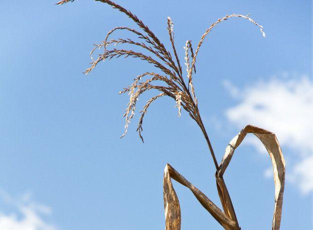 El trigo es uno de los alimentos más afectados. También el arroz y casi todas las frutas y verduras.