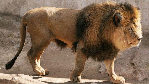La trágica historia del joven que se lanzó a una jaula de leones ...
