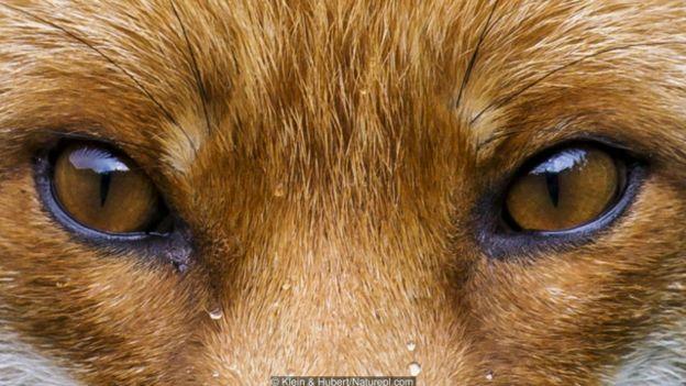 410 Koleksi Gambar Binatang Warna Biru Gratis Terbaru
