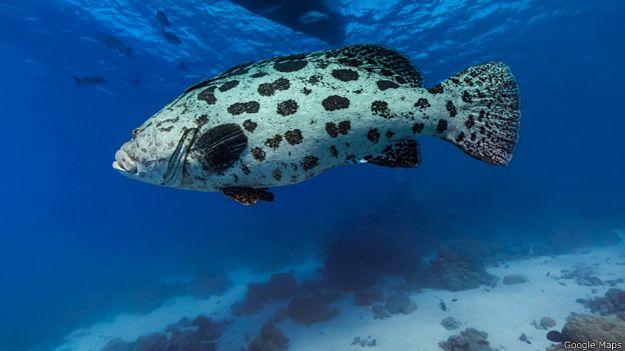 Cod Hole, Gran Barrera de Coral