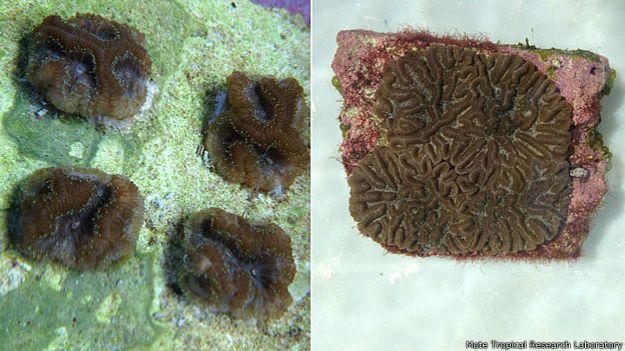 Coral, antes y después