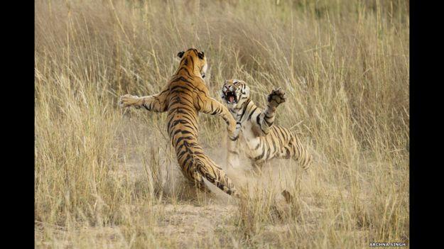 Foto de Archna Singh