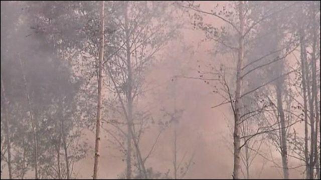 Пожар в подмосковном лесу