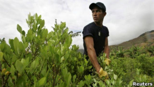 Perú desplaza a Colombia como mayor productor de coca del mundo
