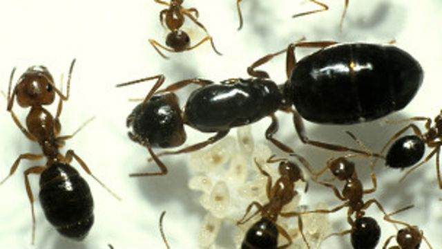 Una colonia de robots-hormiga