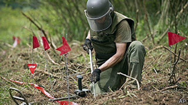 """Científicos croatas entrenan abejas como """"detectores de minas"""""""