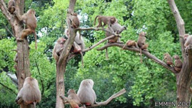 Holanda: estudian el misterio de los monos paralizados