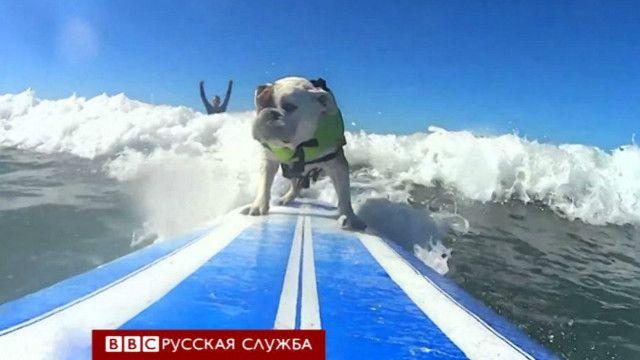 Собака на серфе