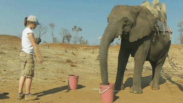 فيل مع مدربه