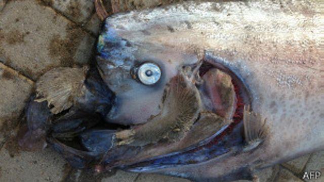 """Las misteriosas """"serpientes"""" marinas gigantes que intrigan a los científicos"""