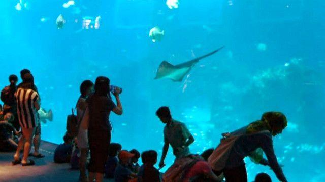 أكبر حوض أسماك على مستوى العالم في سنغافورة