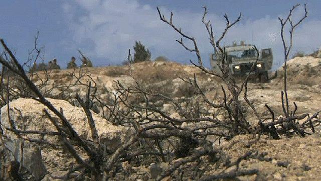اشجار زيتون محروقة بالضفة الغربية