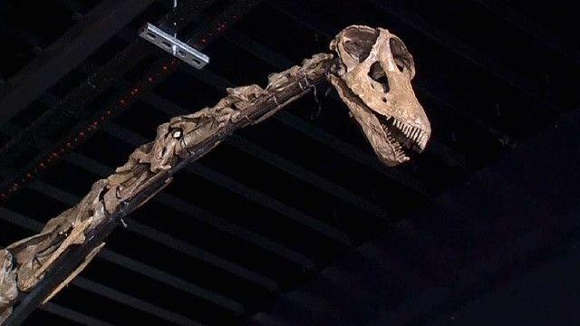 هيكل عظمي لديناصور