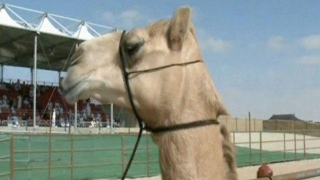مسابقة ملكة جمال الإبل في الإمارات العربية المتحدة