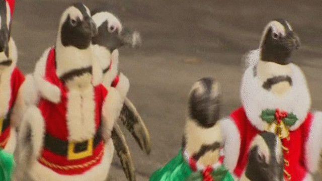 طيور البطريق بلباس بابا نويل