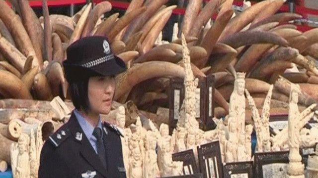 الصين تريد تغيير صورتها كبلد عبور للعاج المهرب