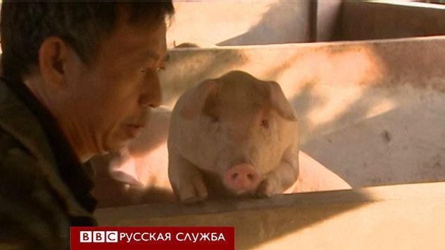Китайская научная лаборатория по клонированию свиней