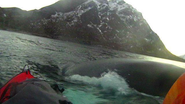 Caiaque e baleia. Foto: EVN/reprodução de vídeo