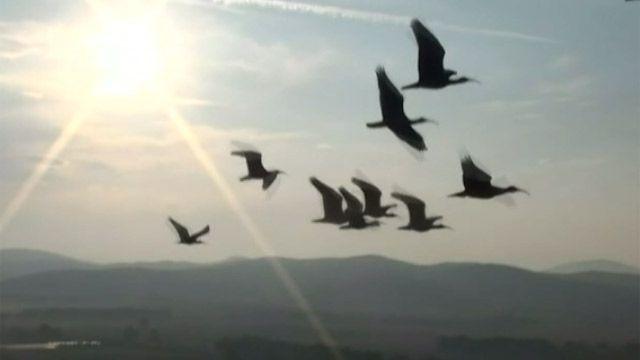 Птицы, летящие клином