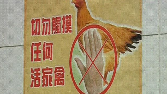 لافتة تحذر من لمس الدجاج