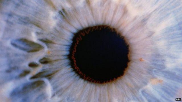 """خلايا أعين الموتى """"قد تعيد الإبصار للأحياء"""""""