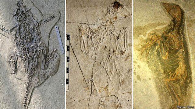 Cómo se formó la Pompeya de los animales prehistóricos