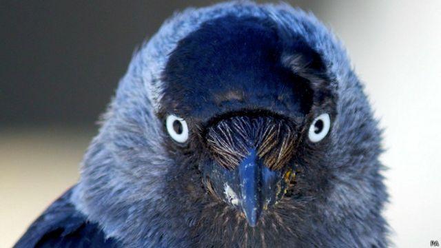 El ave que asusta con la mirada