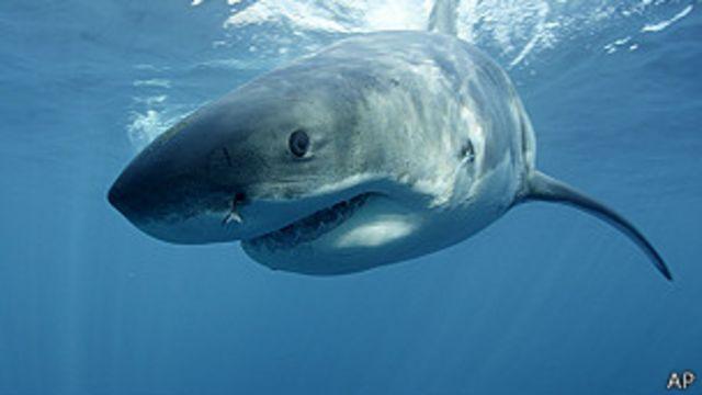 Australia: multan a hombre con US$16.000 por matar a golpes a un tiburón blanco