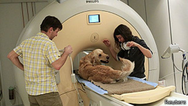 Estudio revela semejanzas entre el cerebro del perro y el del hombre