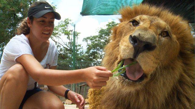 Лев - велика киця?
