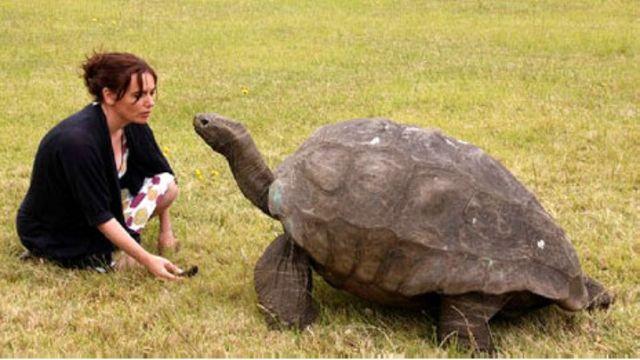 Una tortuga del Atlántico Sur, ¿el animal más viejo del planeta?