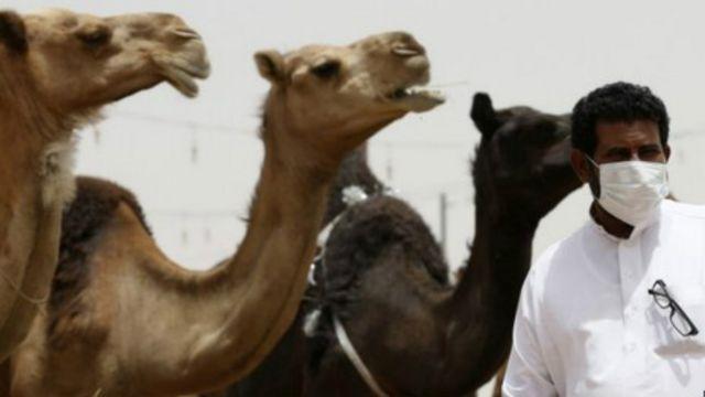 S. Arabistan'da Mers'e karşı 'deve' uyarısı
