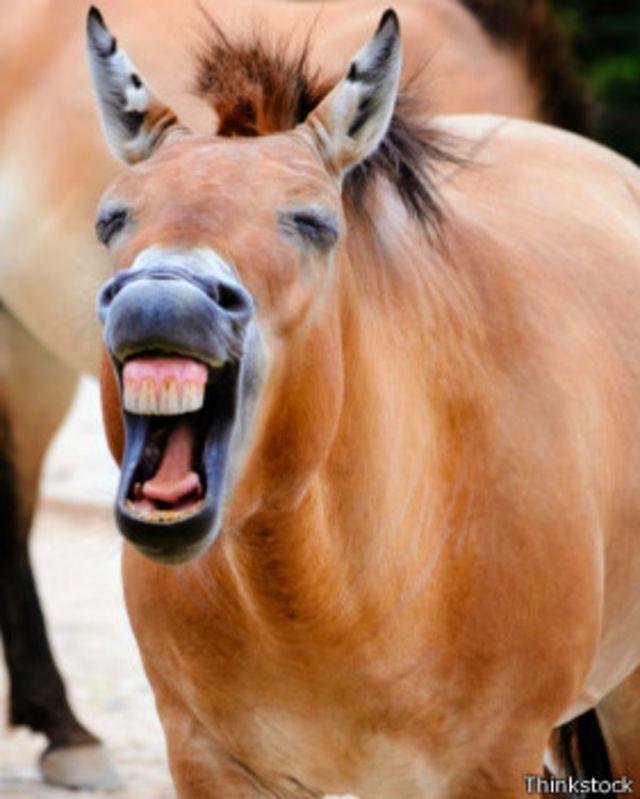 Los últimos de su especie: cómo contar animales amenazados