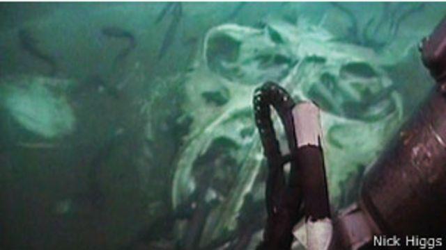 ¿Dónde van cuando mueren los gigantes del mar?