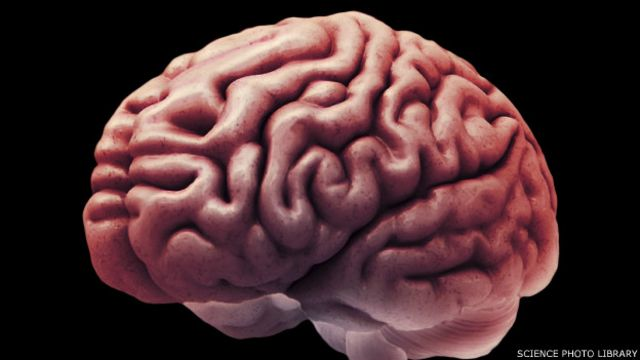 هل تحدد تركيبة المخ توجهاتك السياسية؟