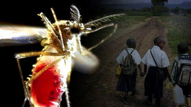 أطفال من تنزانيا لديهم مناعة طبيعية ضد مرض الملاريا