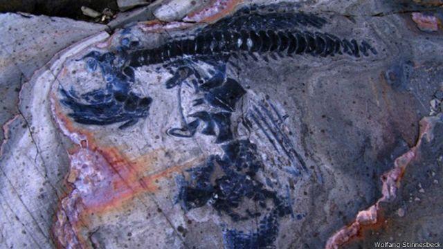 Hallan increíble cementerio de ictiosaurios en el sur de Chile