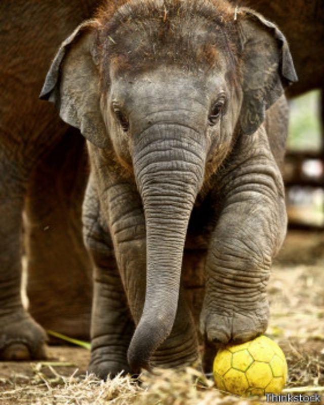 ¿Por qué nos enternecen tanto las crías de mamíferos?
