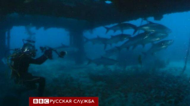 Акулы возле подводной станции