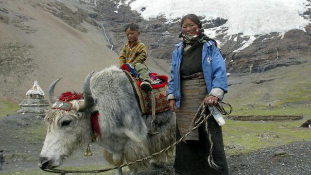 Tibetlileri 'yükseklerde' koruyan gen