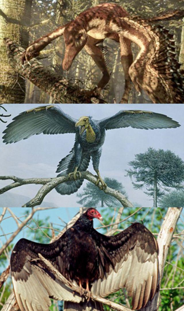 Seis cosas que quizás no sabía sobre los dinosaurios