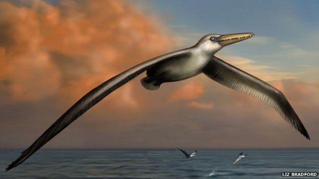 """التعرف على حفريات """"أكبر طائر"""" في التاريخ"""