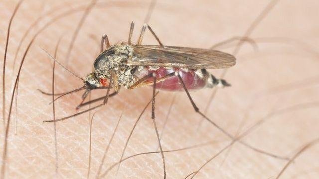 طفيليات الملاريا تصل إلى نخاع العظام