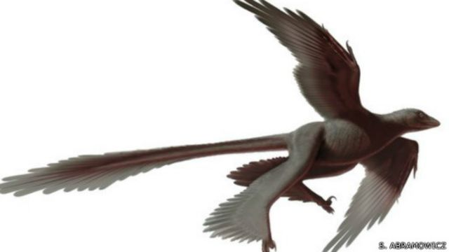 """اكتشاف """"أضخم"""" ديناصور بأربعة أجنحة"""