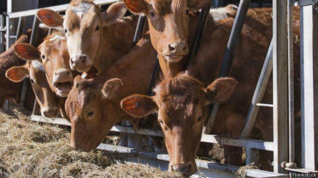 Cerdo, pollo o res: ¿qué carne hay que comer para ser más ecológicos?