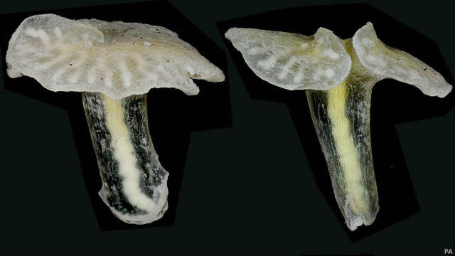 Extraño animal de las profundidades desafía a los biólogos