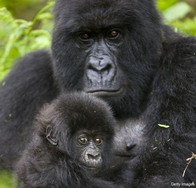 Los animales que el mundo está perdiendo cada vez más rápido